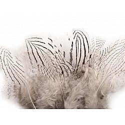 Pene decorative de fazan, lungime 5 - 11 cm (pachet 20 buc.) - alb