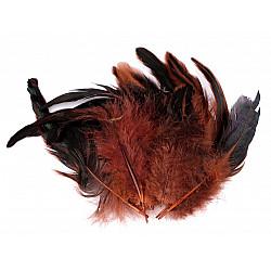 Pene decorative de găină, lungime 6-20 cm (pachet 20 buc.) - red-brown