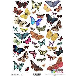 Hartie de orez A4 - Colectia de fluturi