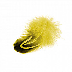 Pene fazan - Galben, 24 buc.