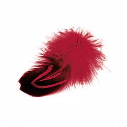 Pene fazan - Rosu, 24 buc.