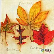 Servetele - Colectia de frunze - 33x33cm, 1 pachet (20 buc.)